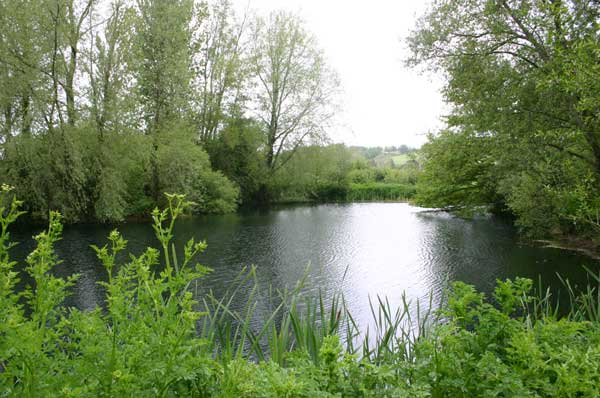 Tolpuddle, Dorset Trout Lakes - photo