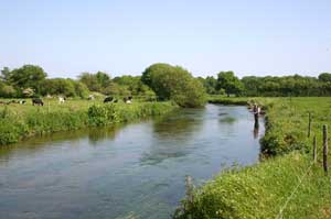 Fly Fishing on the River Frome, Dorset - photo