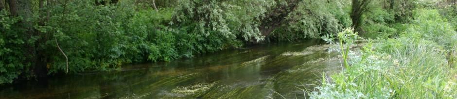 Dorset Chalk Stream Fly Fishing photo