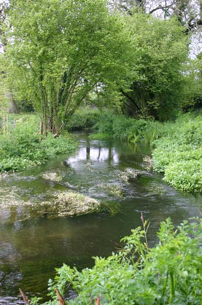 Fly fishing beats in Dorset